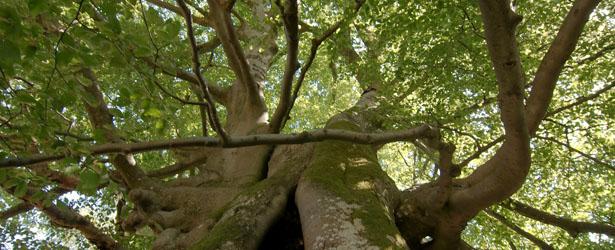 naturschutzgebiete-3
