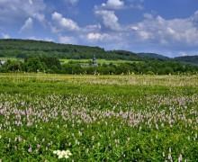 Als Juwel ausgezeichnet: Das Wetterbachtal bei Burbach-Holzhausen